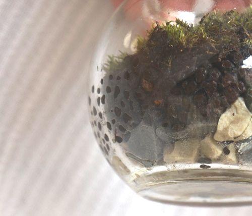 苔テラリウム,100均,キャンドゥ,バブルボウル,おすすめ,容器,ガラス
